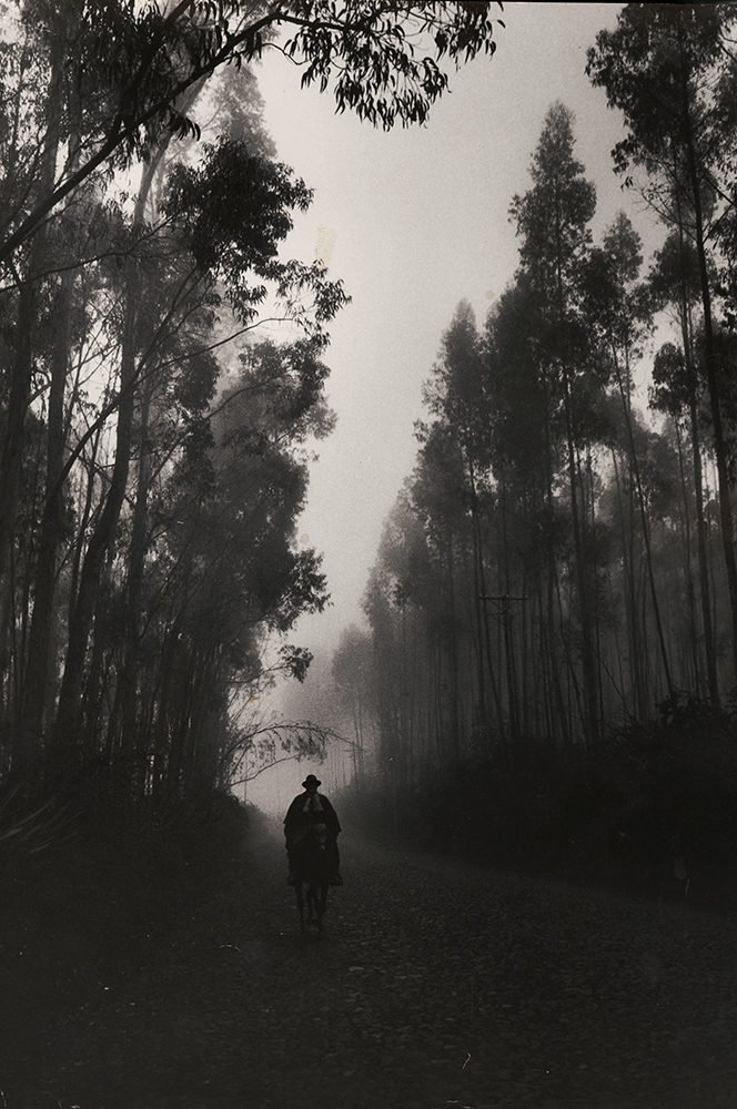 Cornell Capa - Forested Road, Equador