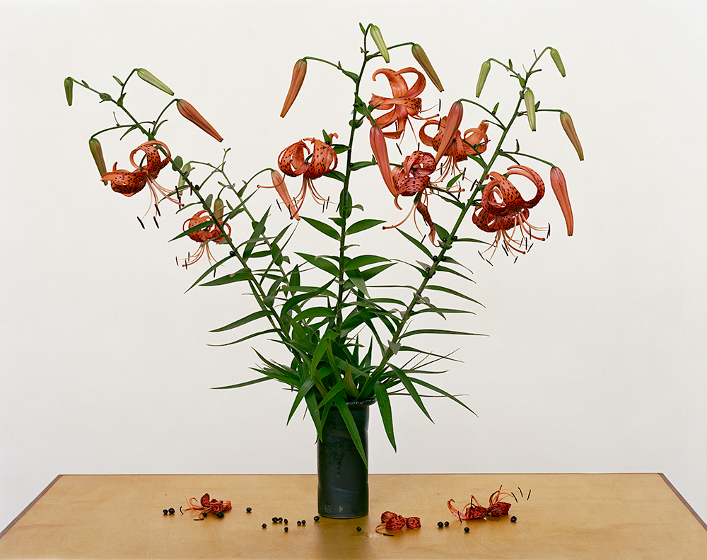 "Paula Chamlee - From the series ""From the Field."" ""Turk's Cap Lily, 2013"""