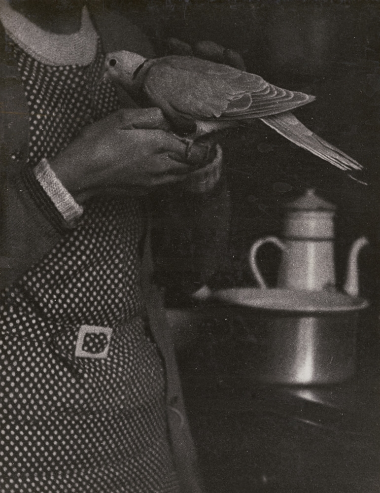 Roger Parry - Woman, Dove and Stove