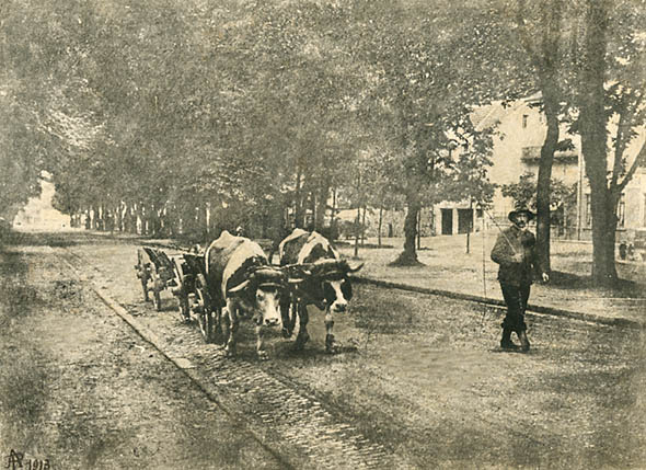 Photo Detail - A. P. - Man Leading Oxen Carts up Street