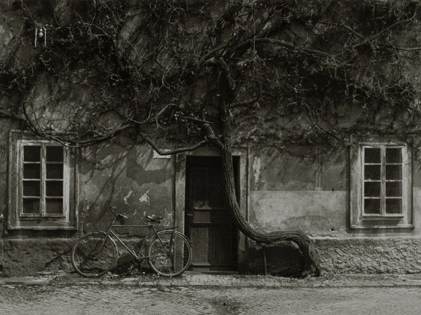 Stanko Abadžic - Forgotten Bicycle
